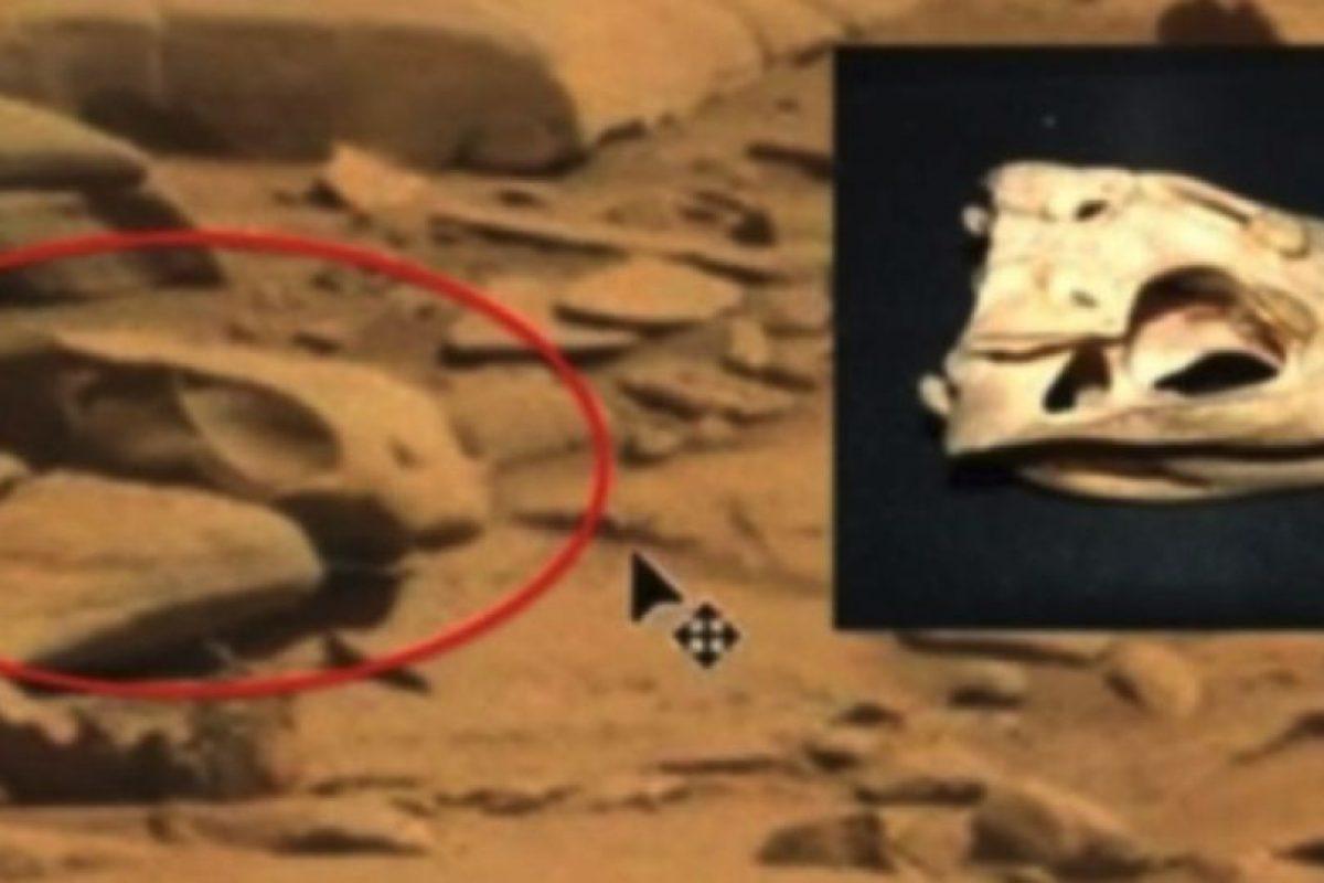 Un cráneo Foto:NASA. Imagen Por: