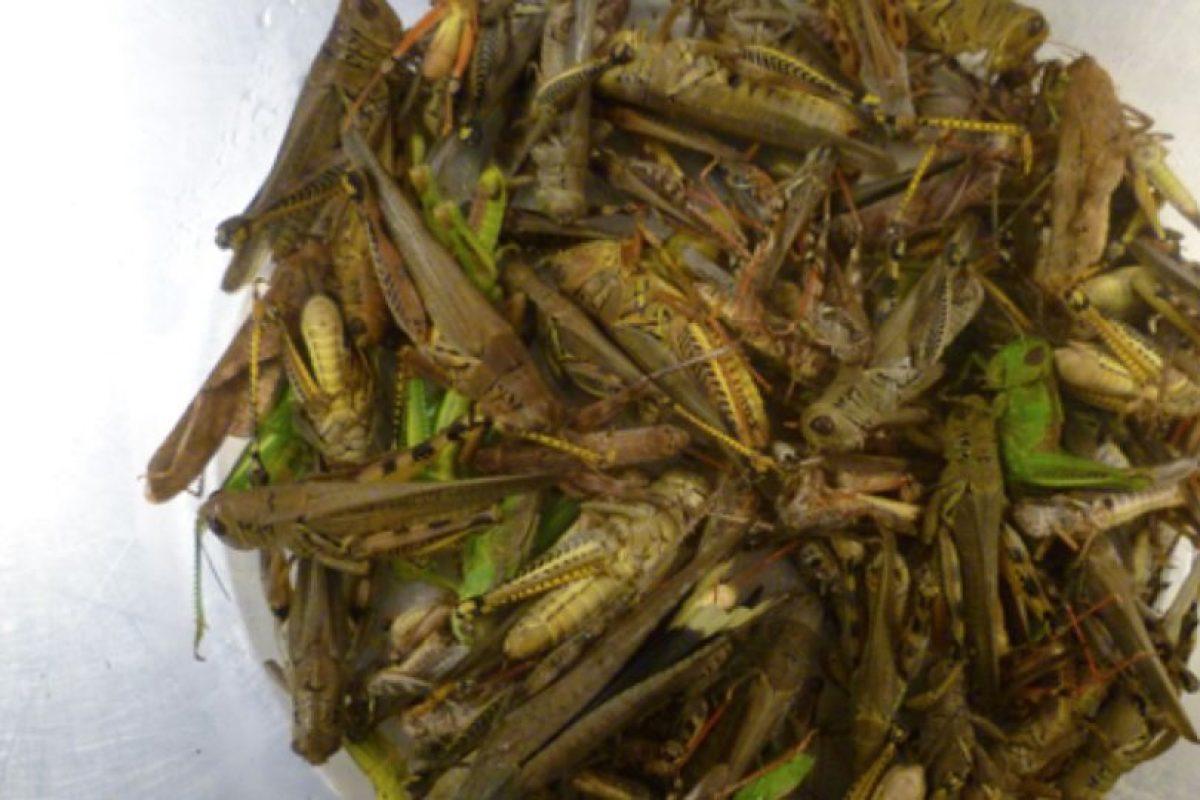 Desayunaba gusanos, almorzaba cucarachas… Foto:erichchritohphamya. Imagen Por: