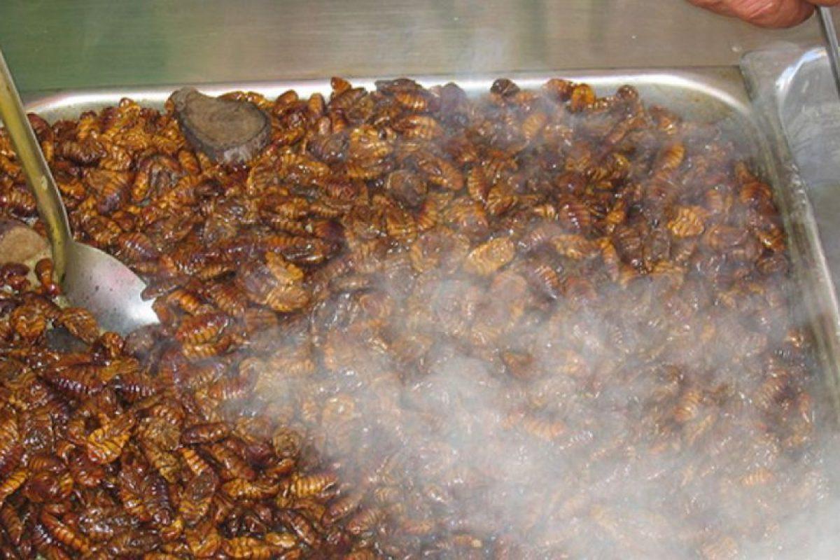 Ni se ha regulado su tratamiento. Foto:vía earthexcursion.com. Imagen Por: