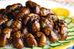 Los escarabajos son los más apetecidos a la hora de comer insectos. Foto:vía Youtube. Imagen Por: