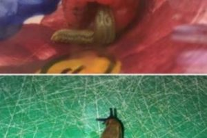 Esto le pasó a una mujer inglesa con sus frambuesas. Foto:vía Imgur. Imagen Por: