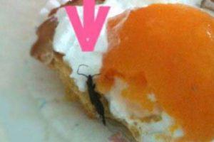 Insecto dentro de huevo. Foto:vía Imgur. Imagen Por: