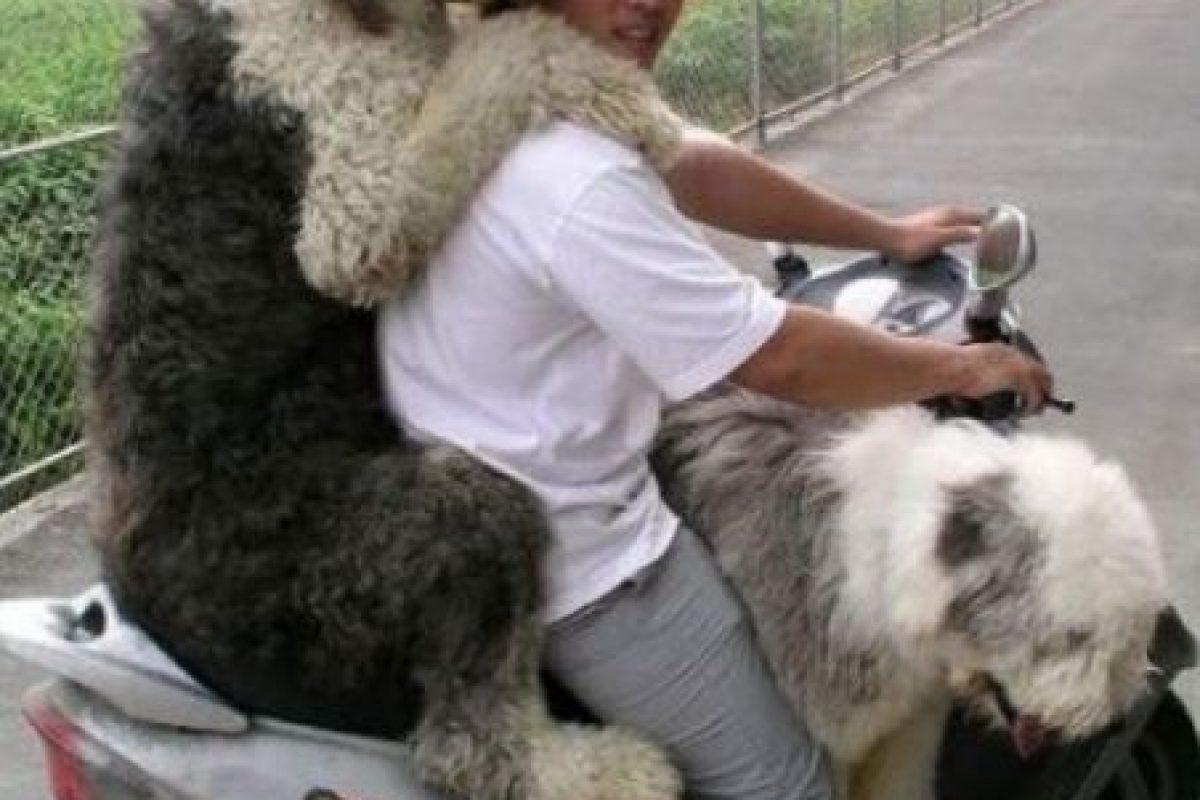 Estos dos querían ir con su amo a donde fuera. Foto:Pinterest. Imagen Por: