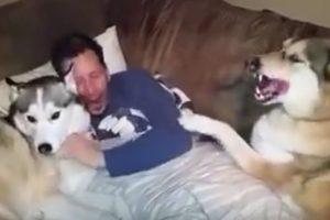 Este fue el momento cumbre del husky Foto:Vía Youtube. Imagen Por: