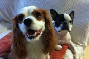 El compartimiento en que viajaba el perro tenía problemas con la calefacción. Foto:Vía facebook.com/germank. Imagen Por: