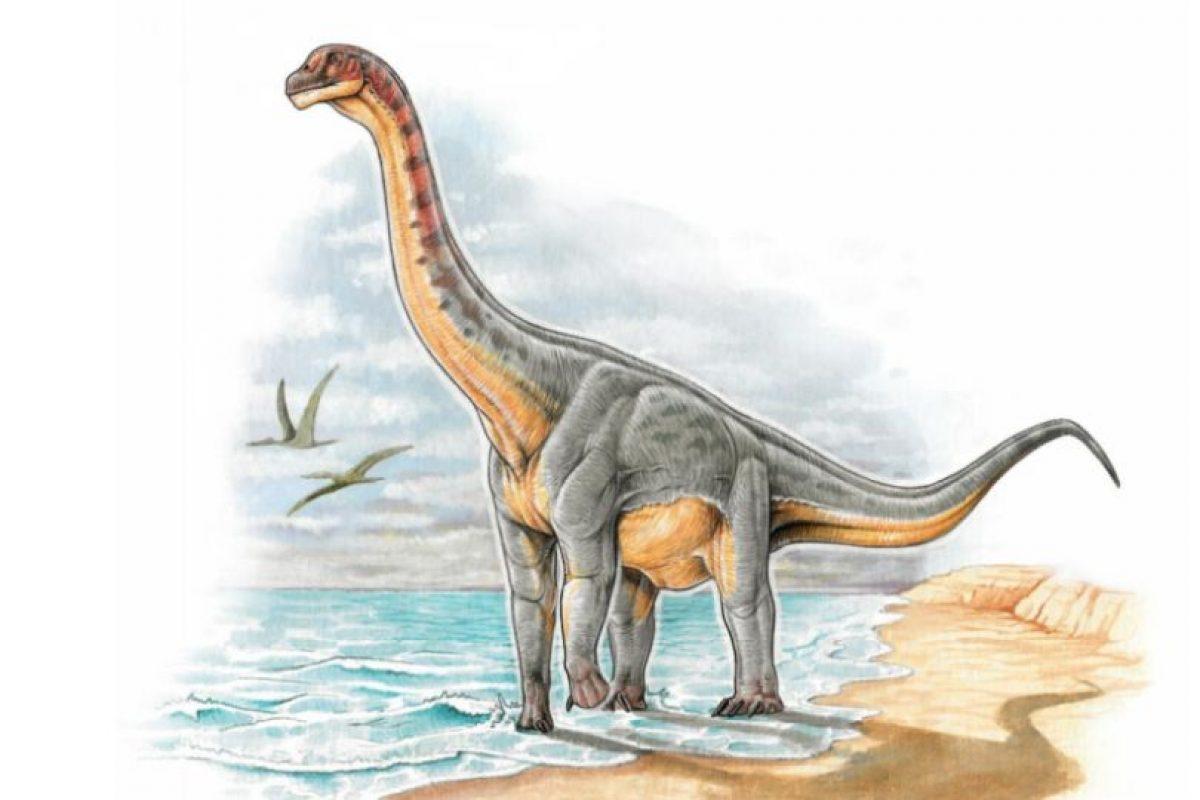 Sin embargo, el Padillasaurus leivaensi es el primer dinosaurio terrestre hallado. Foto:Vía facebook.com/CentrodeInvestigacionesPaleontológicas. Imagen Por: