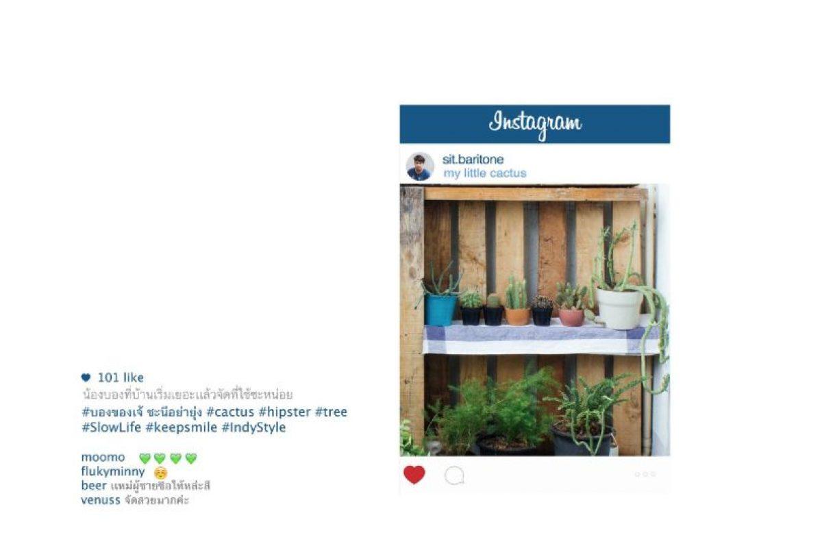 Plantas, para mostrar un delicado sentido estético. Foto:vía Facebook/Chompoo Baritone. Imagen Por:
