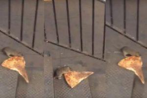Como todo buen neoyorquino, la rata quiere su pizza. Foto:vía twitter. Imagen Por: