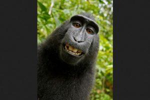 Dueño de la cámara con la que Naruto se tomó unas cuantas selfies. Foto:Vía mediapeta.com. Imagen Por: