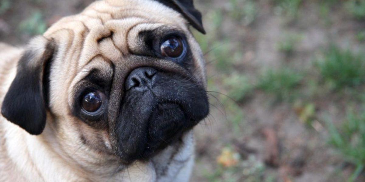 Recuperan perro robado avaluado en $1 millón: ahora mueve la cola junto a su amo