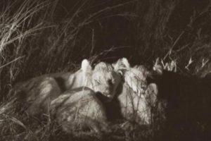 """Y que su tío """"Jericho"""" es quien los cuida. Foto:vía AFP. Imagen Por:"""
