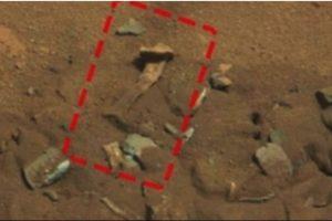Un fémur Foto:NASA. Imagen Por: