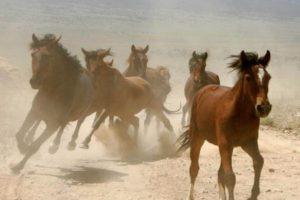 """""""La Mona"""" era aficionada a los caballos. Compró el más caro de la época, """"Lady Di"""". Foto:vía Getty Images. Imagen Por:"""