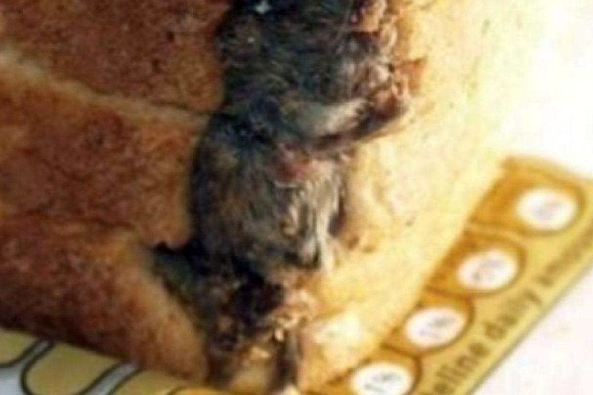 La rata de relleno. Foto:vía Imgur. Imagen Por: