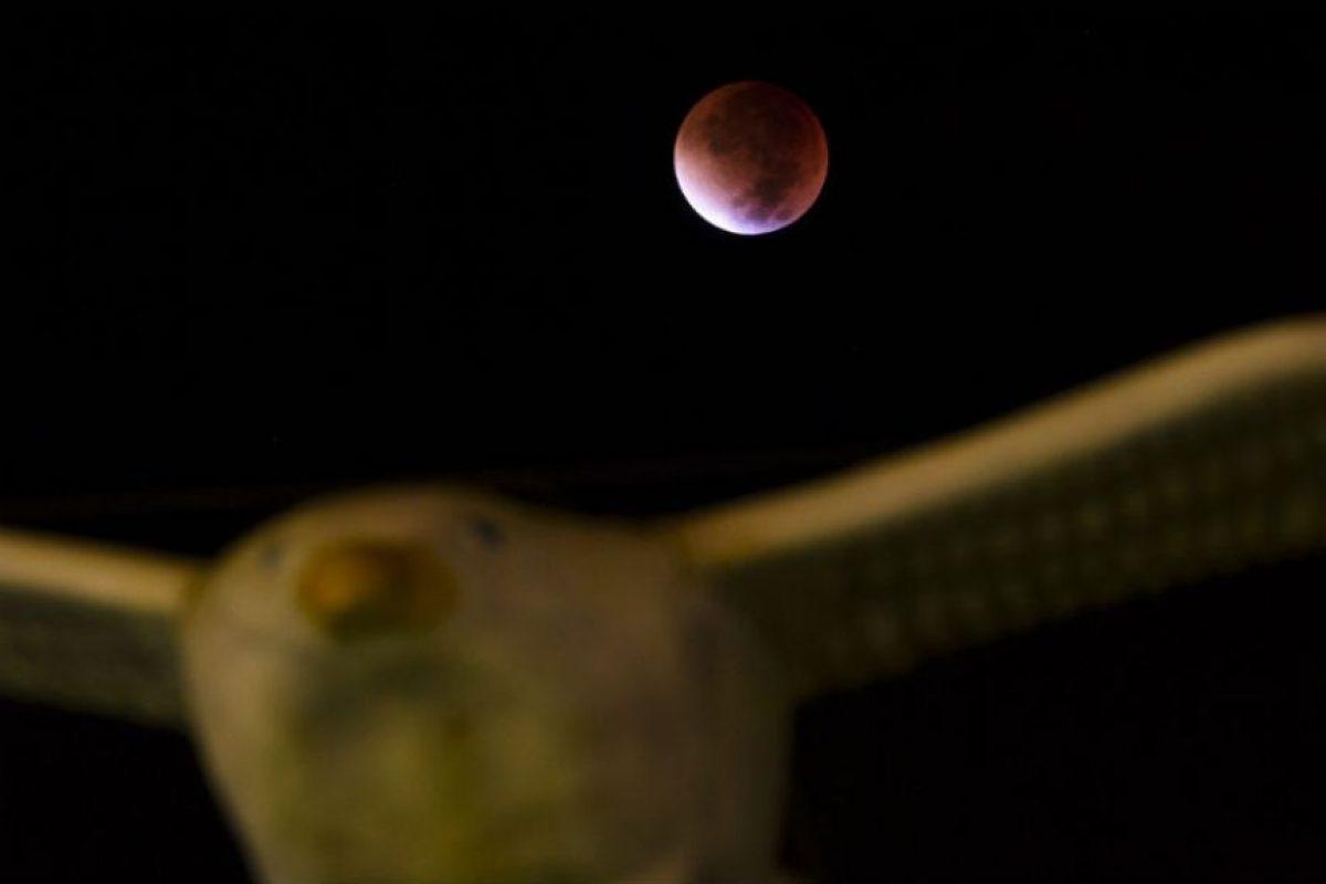 Y también se pintó de rojo. Foto:AFP. Imagen Por: