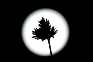 En Los Angeles, California las palmeras no evitaron que la Luna se luciera. Foto:AFP. Imagen Por: