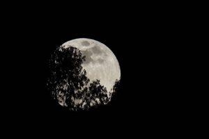 La superluna vista desde Quito (Ecuador), durante el eclipse total de Luna. Foto:EFE. Imagen Por: