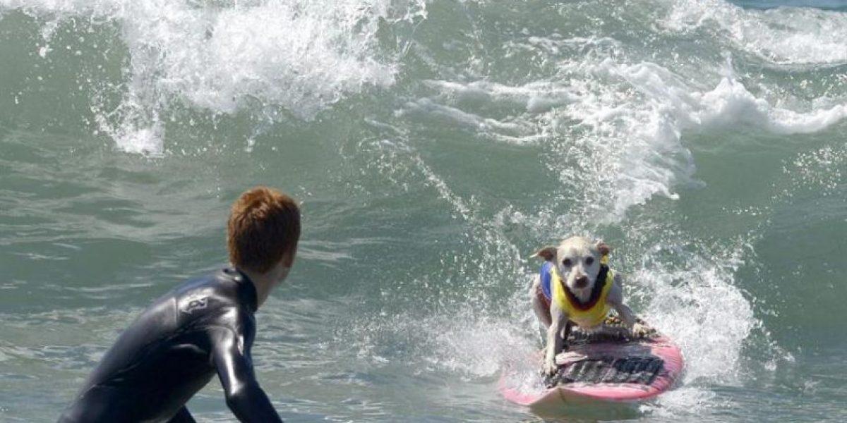 Las más hilarantes imágenes de la Cup Dog Surfing de Estados Unidos
