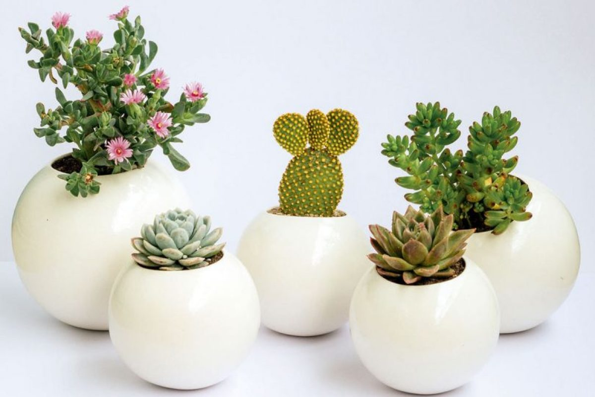 Cactus sublimes. Imagen Por: