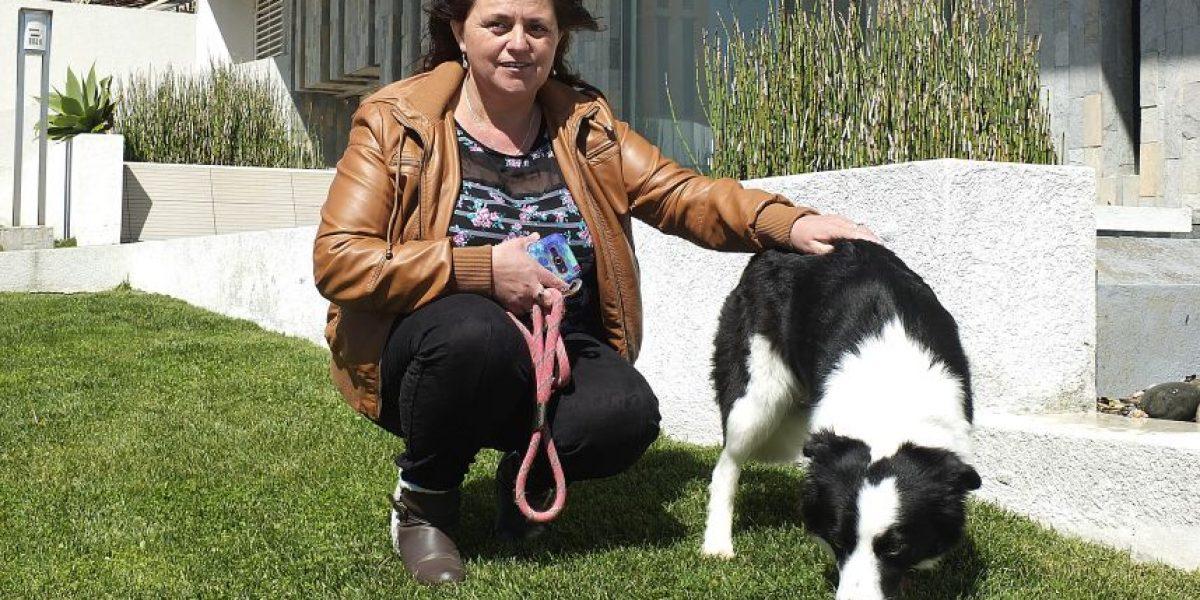 Viña del Mar: incautarán videos de polémico episodio en un ascensor por un perro