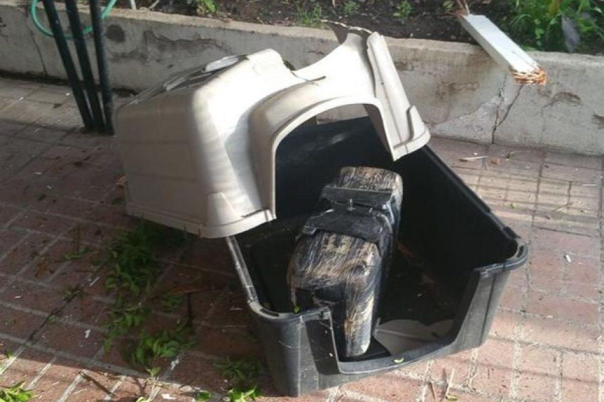 Destruyó la casa de la mascota de la familia Foto:Departamento de Policía de Nogales. Imagen Por: