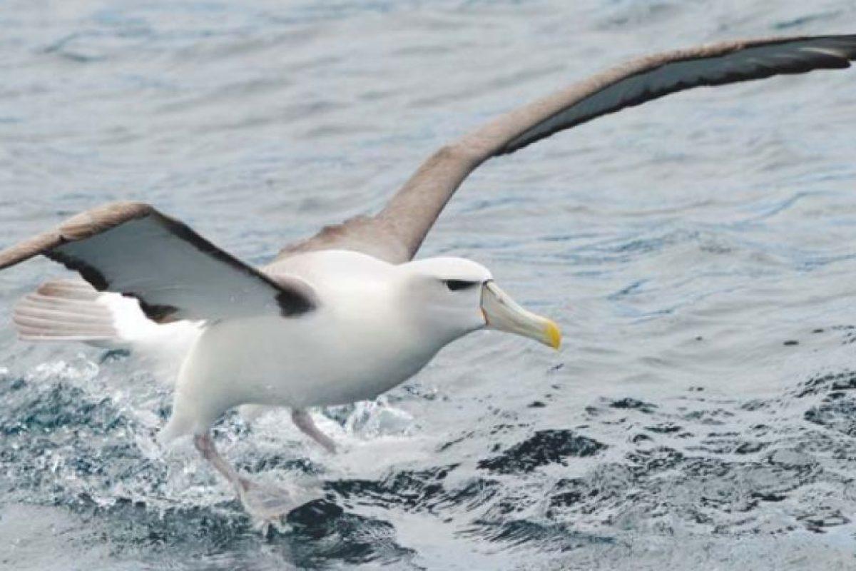 El lugar cuenta con 39 especies diferentes de aves. Foto:Vía http://mfe.govt.nz. Imagen Por: