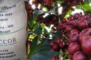 El café de la Hacienda Santa Inés en Brasil. El método que tienen para sembrar y recoger el grano es el tradicional. Vale 50 dólares la libra. Foto:vía Fazenda Santa Inés. Imagen Por: