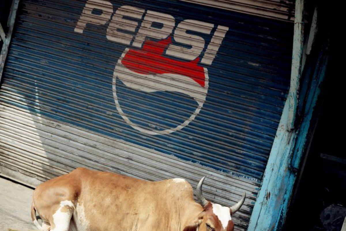 Además, están protegidas por la ley en diversos estados del país Foto:Getty Images. Imagen Por: