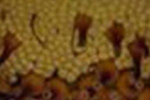 Y por supuesto, los tripofóbicos… Foto:vía Jardín Botánico de Chicago. Imagen Por: