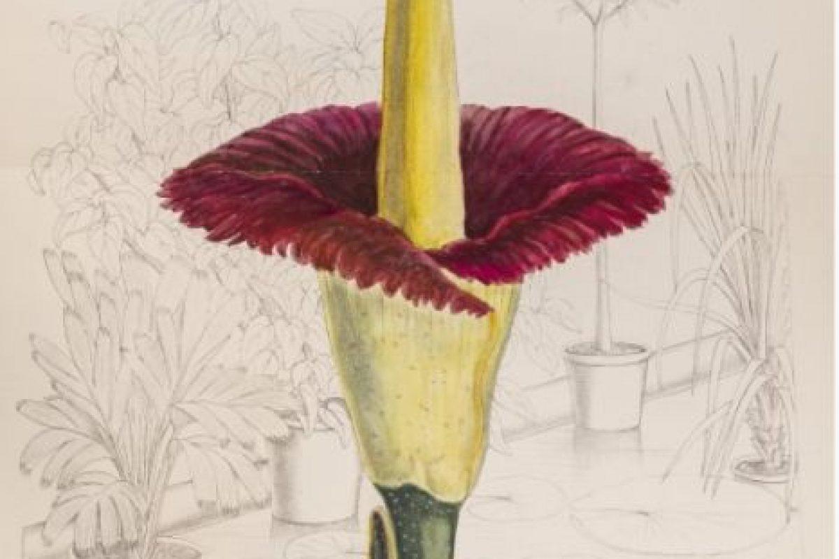 Florecita. Linda florecita. Foto:vía Jardín Botánico de Chicago. Imagen Por: