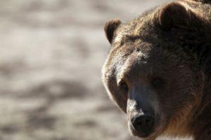 Y por lo general viven hasta 25 años en estado salvaje. Foto:Getty Images. Imagen Por: