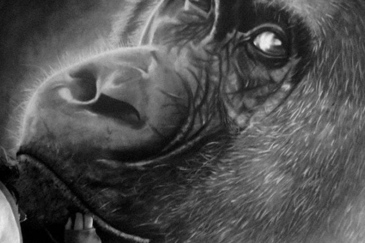 Un orangután Foto:Gentileza. Imagen Por: