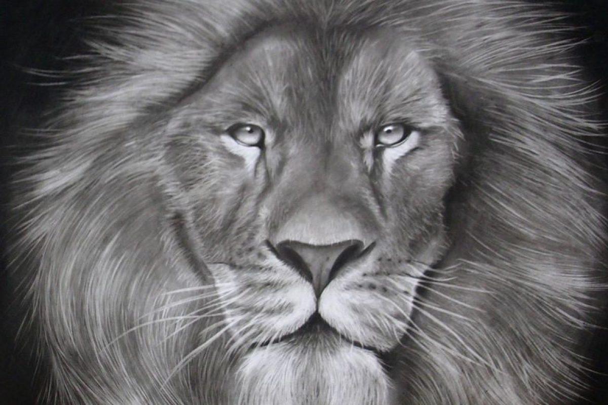 Un león Foto:Gentileza. Imagen Por: