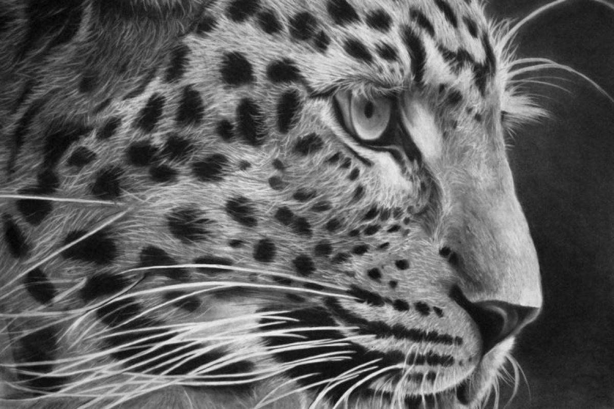 Un tigre Foto:Gentileza. Imagen Por: