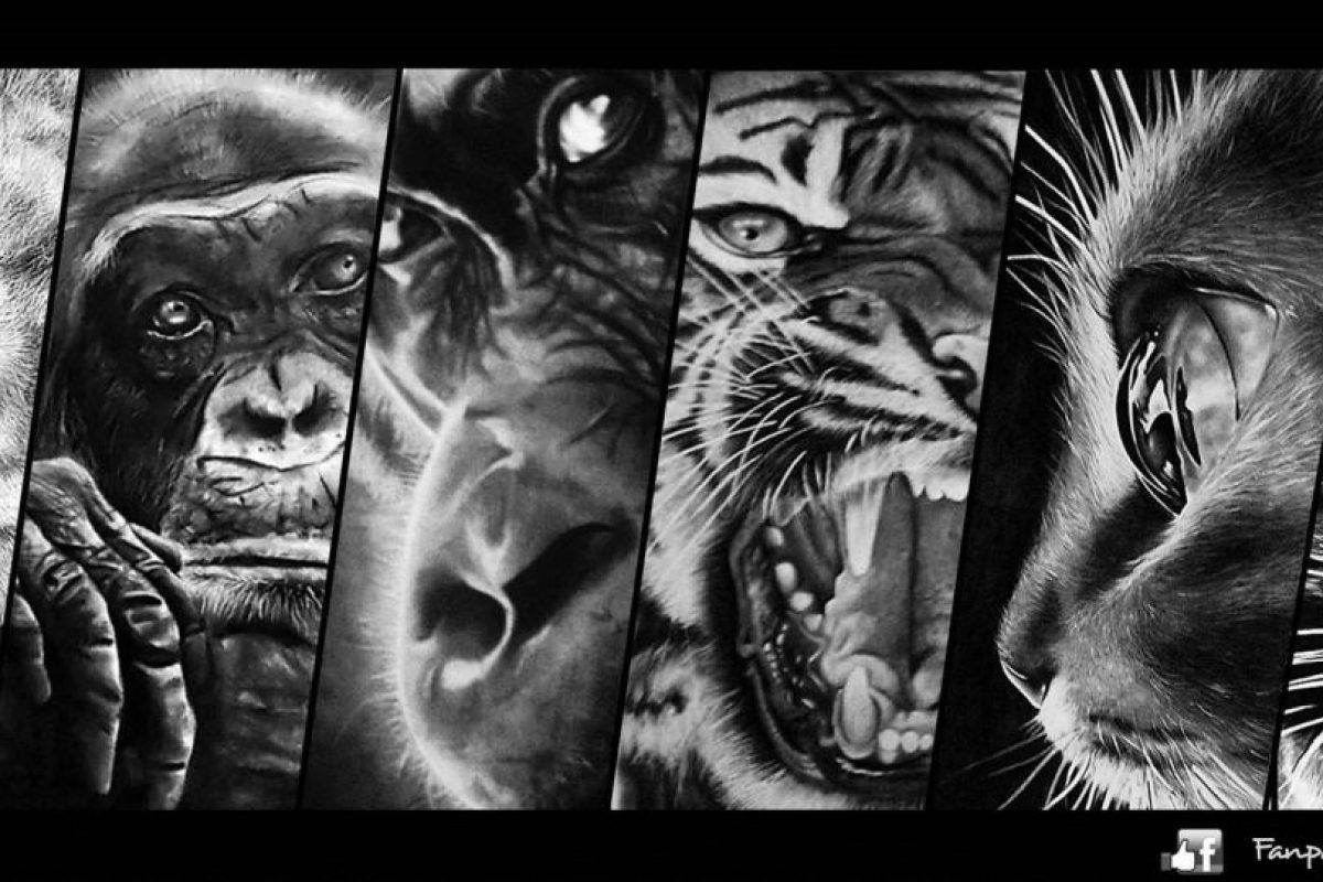 Animales de la selva Foto:Gentileza. Imagen Por: