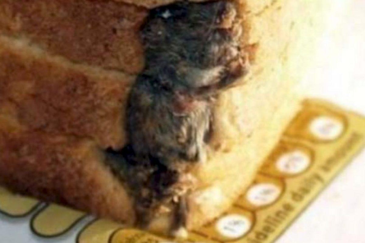 Esta rata aquí. Foto:vía EpicFail.com. Imagen Por: