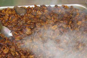 """Video: 7 tutoriales para cocinar insectos y gusanos que los horrorizarán """"La recolección de insectos y su crianza a nivel del hogar o la escala industrial puede ofrecer importantes oportunidades de subsistencia para las personas, tanto en países en desarrollo como en países desarrollados"""", indicó el estudio. Foto:vía Tumblr. Imagen Por:"""