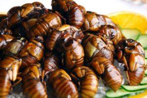 Los escarabajos son los más apetecidos a la hora de comer insectos. Foto:vía Tumblr. Imagen Por: