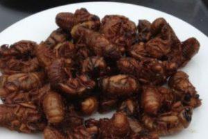 Video: 7 tutoriales para cocinar insectos y gusanos que los horrorizarán Lo más consumido son los escarabajos (31%) orugas (18%) y abejas y hormigas (14%). Después les siguen los saltamontes, langostas y grillos (13%), cigarras, saltamontes, chicharritas, cochinillas y chinches (10%), libélulas (3%) y moscas (2%). Foto:vía Tumblr. Imagen Por: