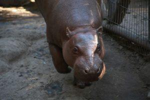 Foto:Gentileza Buin Zoo. Imagen Por: