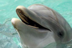 """Algunos de los siguientes animales han sido """"arrestados"""" por cometer crímenes Foto:Getty Images. Imagen Por:"""