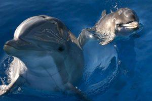Delfines: En alguna ocasión se detuvo a un delfín proveniente de Israel Foto:Getty Images. Imagen Por:
