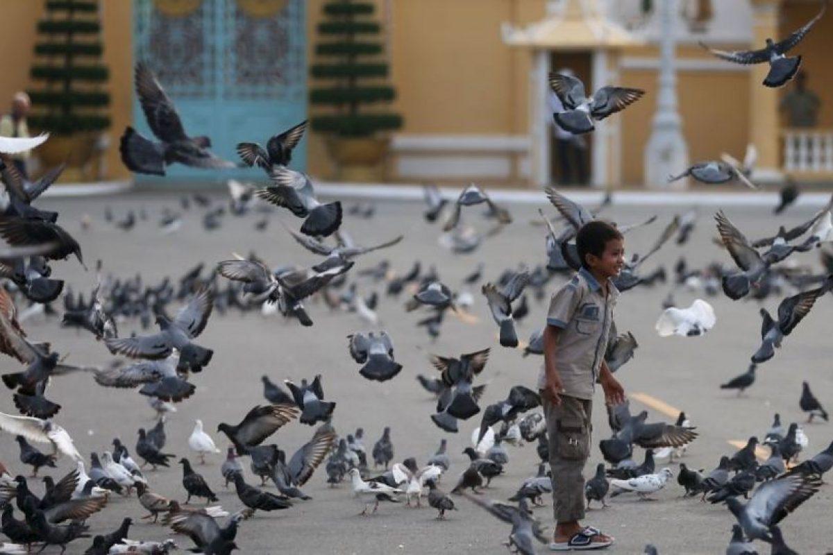 """También Irán capturó palomas """"espías"""" en 2008, en una planta nuclear. Foto:Getty Images. Imagen Por:"""