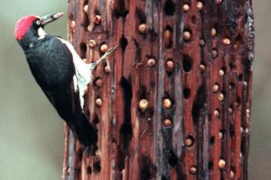 También las rechazó. Foto:vía Tripofobia.com. Imagen Por: