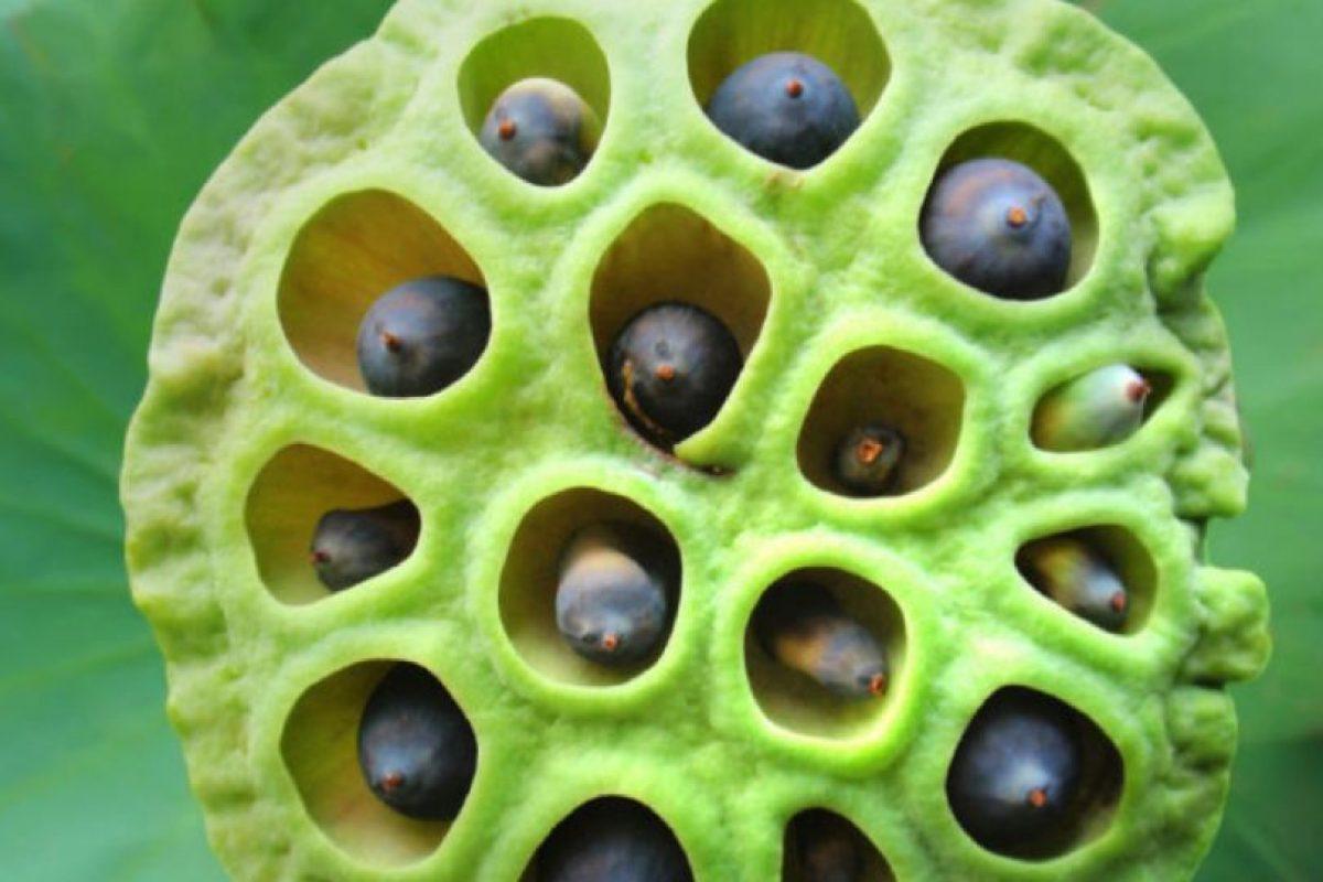 También con los gérmenes y los insectos. Foto:vía Tripofobia.com. Imagen Por:
