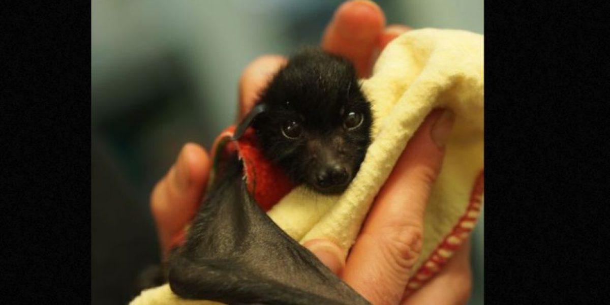 Video: Así es como este bebé murciélago se reúne con su madre