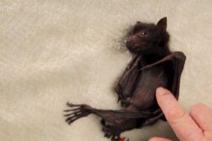 Estos pequeños zorros perdieron a sus madres. Foto:vía Wakaleo/Youtube. Imagen Por: