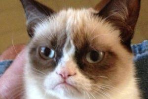 Quien tiene una expresión gruñona Foto:Vái Twitter. Imagen Por: