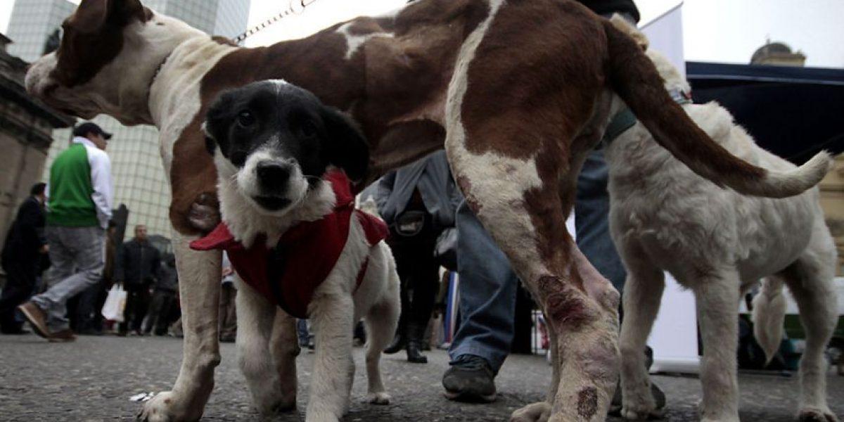 Corte rechazó recurso presentado contra mujer que tiene 16 perros en su casa
