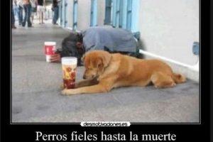 Así demuestran los perros su fidelidad con sus amigos humanos Foto:Desmotivacion. Imagen Por: